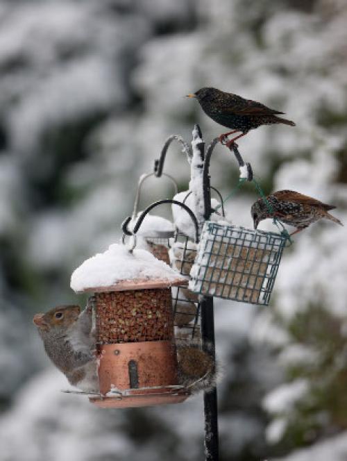 As A Snowbird, Where Do You Want To Nest?
