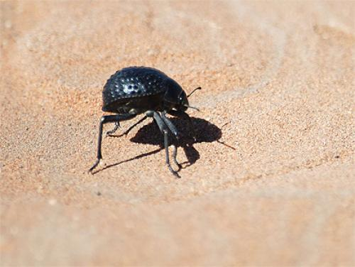 BC Grads: Solving The World's Water Crisis With A Beetle?