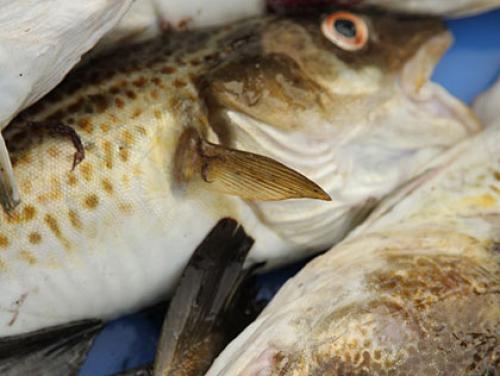 Boston Farmers' Markets Begin Selling Local Day-Boat Fish