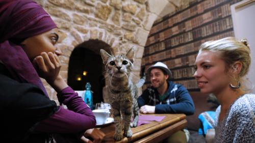 Could A Cat Cafe Be Coming To Boston?