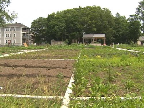 Gardening With Gutner: A Look At Nightingale Community Garden