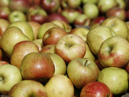 Gardening With Gutner: Apple Picking Tips