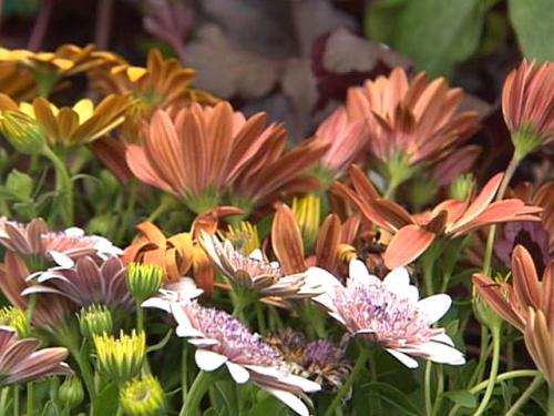 Gardening With Gutner: New Annuals And Perennials For 2012