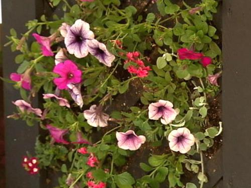 Gardening With Gutner: Vertical Garden For Mother's Day