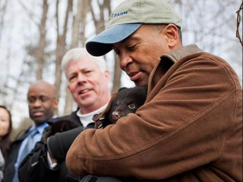 Gov. Patrick Joins Black Bear Cub Survey