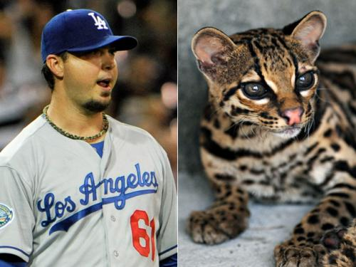 Josh Beckett Suing Company For Destroying Ocelot Habitat On His Texas Ranch