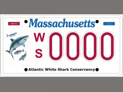 Specialty License Plates Rake In Millions